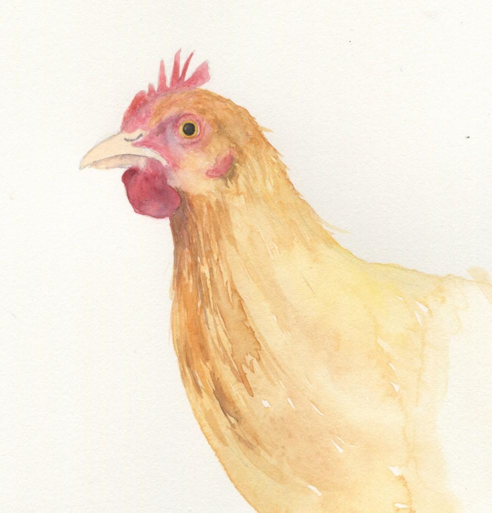 In Progress Chicken No. 3